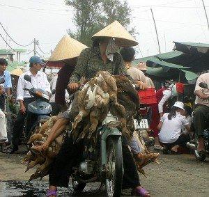 """In Vietnam als Motorrad-Beifahrer einheimischer """"Easy Rider"""""""