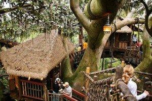 Baumhaus-Luxus über Afrikas Savanne